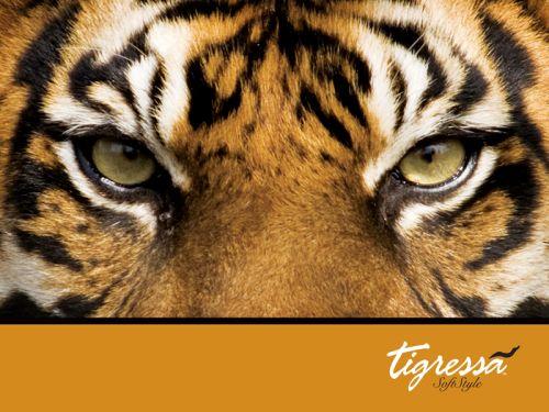 tiger_paper2_800x600
