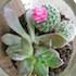 Hanging Succulent Terrarium / Garden