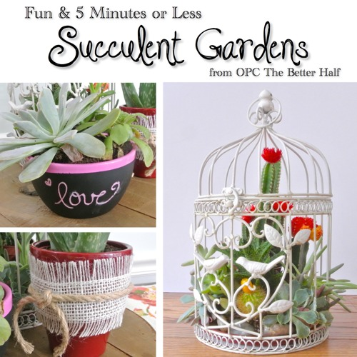 Three Easy Succulent Garden Ideas One Project Closer
