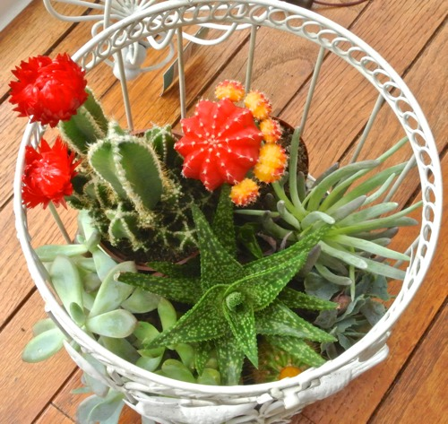 Birdcage Succulent Garden - OPC The Better Half