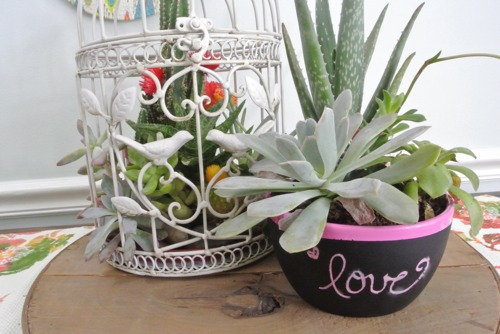 Easy Succulent Gardens - OPC The Better Half