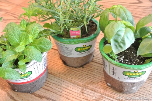 Herbs -  OPC The Better Half
