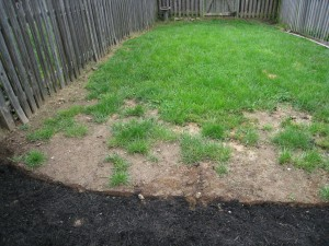 bare patches in lawn from dog waste